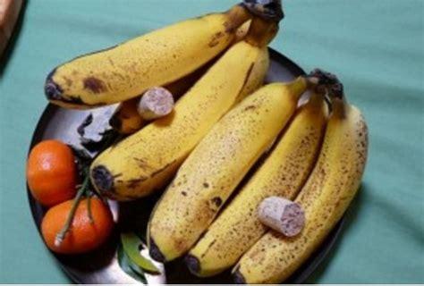 mouche cuisine voici comment éloigner les mouches à fruits et empêcher