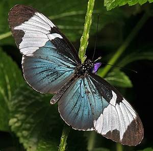 12 Rare-Sighted And Appealing Butterfly Species