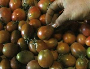 Black Plum Heirloom Tomato - urbantomato