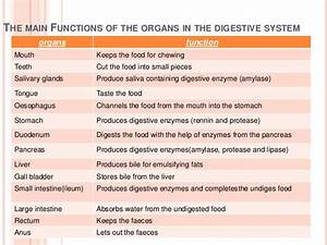 2.3 the human digestive system