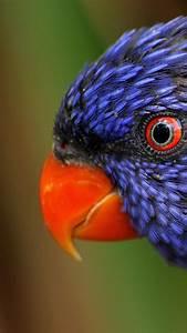 wallpaper, rainbow, parrot, , beautiful, , colorful, animals