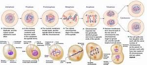 South Pontotoc Biology  Unit 9  Cellular Reproduction