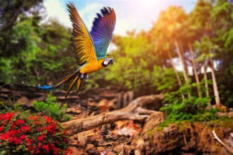 wallpaper sunlight forest birds animals nature
