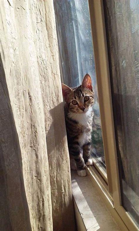 cats catsincare