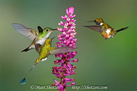 hummingbird flowers hunger rate every animal