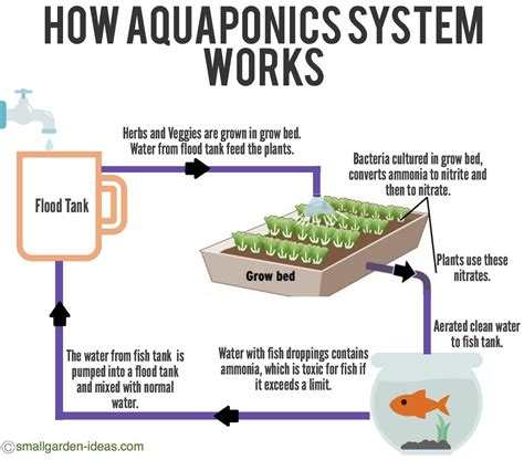aquaponics systems  indoor gardening small garden ideas