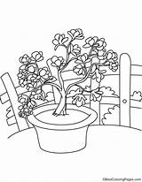 Magnolia Flowers Coloring Bestcoloringpages sketch template