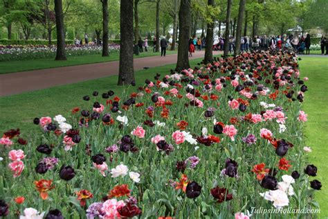 landscaping seminars flower garden events tulips in holland