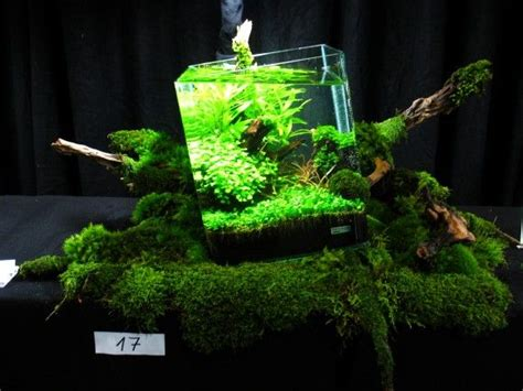 Oliver Knott Aquascaping by Oliver Knott Nano Out Of Square A Bit Much To Our