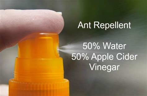 ant killer remedies natural ways  repel ants effectively