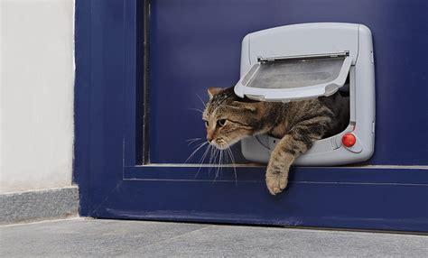 die katzenklappe nichts wie raus  die abenteuerliche