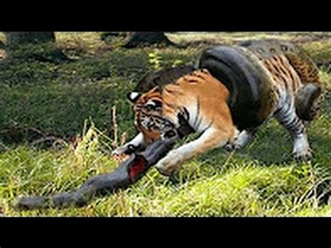 animal flight  amazing wild animal attacks  youtube