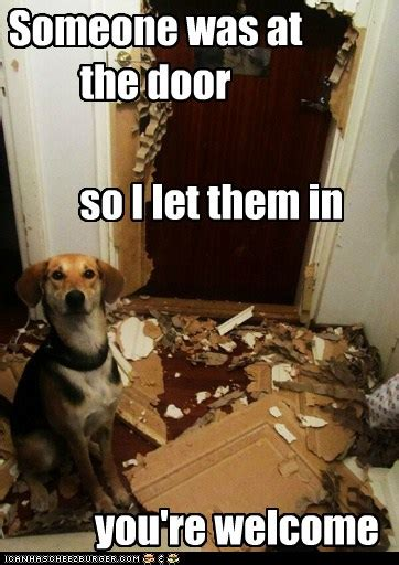 dog logic   flaws    hotdog dog pictures