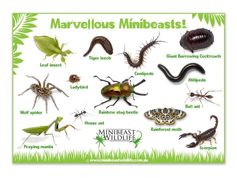 minibeast posters minibeast wildlife