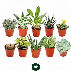 Sukkulenten Arten Bilder : 10 verschiedene sukkulenten 5 5cm topf im set ebay ~ Lizthompson.info Haus und Dekorationen