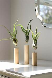 27 Coolest Ways To Display Air Plants - Shelterness