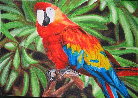 oil pastels parrot  blossomcrown  deviantart