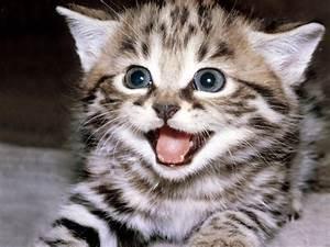 Emoticons - Ani... Cute Cats