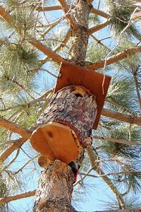Eastern Screech Owl House Plans