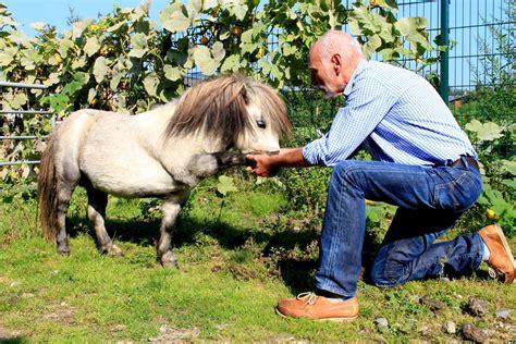 osteopathie bei pferden und hunden physiotherapie warnshuis