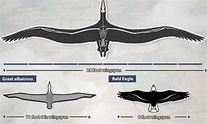 U0026 39 Condor U0026 39  With 24