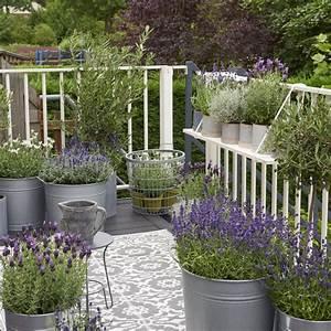 Lavendel Pflanzen Im Topf : balkonplant van het jaar 2018 lavendel bloemenbureau ~ Lizthompson.info Haus und Dekorationen