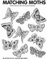 Moth Coloring Pages Match Crayola Moths Find Matching Print Worksheets Printable Colors Crayon Cycle Adults Colored Insect Thanksgiving Butterfly Preschool sketch template