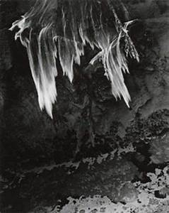 1000+ images about Minor White on Pinterest | Frosted ...