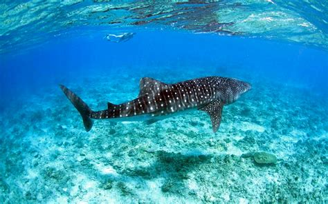 Bid Fish Maldives Marine Lab The Big Fish Network South Ari Atoll