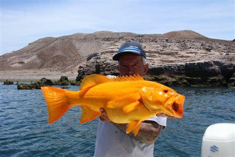 grouper golden pb wow