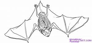 How to Draw a Bat, Step by Step, Halloween, Seasonal, FREE ...