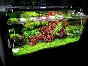 Sauerstoff Im Aquarium : was ist aquarium soil unterschiede zu kies und sand mehr ~ Eleganceandgraceweddings.com Haus und Dekorationen