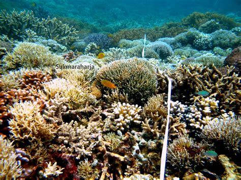 pulau raja ampat keindahan alam bawah laut terumbu