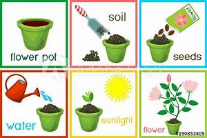 U0026quot Instructions On How To Plant Flower In Six Easy Steps