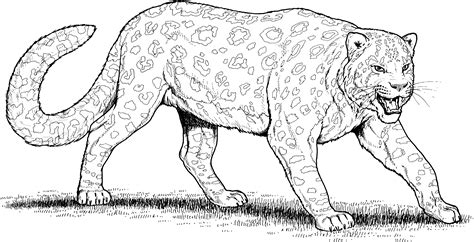 Free Leopard Seal Coloring Pages