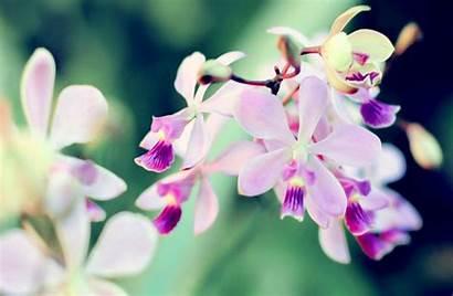 Orchid Desktop Wallpapersafari