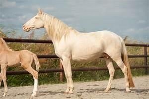 2 Chevaux Occasion : chevaux vendre haras de bouchetis ~ Medecine-chirurgie-esthetiques.com Avis de Voitures