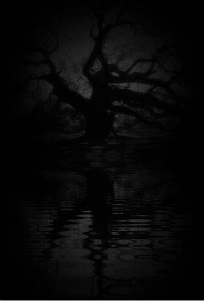 Dark Forest Tree Animated Trees Cool Nature