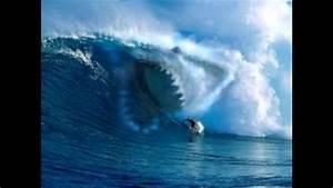 Megalodon Shark Found Alive | www.pixshark.com - Images ...