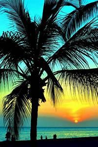 überwintern Von Palmen : 42 richtig einzigartige bilder von palmen ~ Michelbontemps.com Haus und Dekorationen