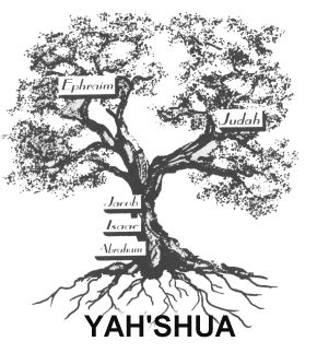 Image result for the olive tree of life in the bible