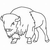 Bison Coloring Drawings Buffalo Pages Drawing Animal Animals Printable Draw American Thecolor Sketches Outline Sketch Template Bestcoloringpagesforkids Books General Baby sketch template
