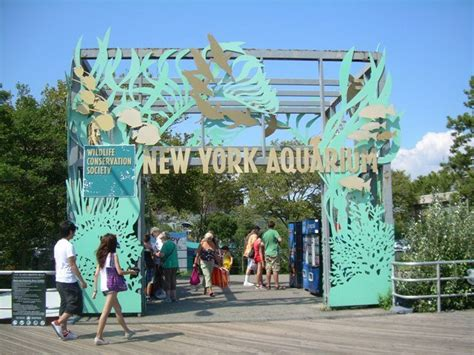 coney island aquarium hours the new york aquarium how to get there and what to do