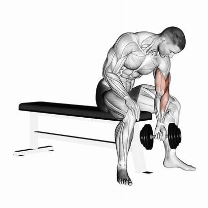 Curl Concentration Dumbbell Curls Biceps Workout Exercise