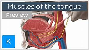 Muscles Of The Tongue  Preview