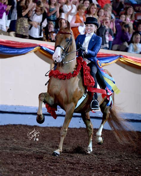 cbmf pleasure classic legal street morgan dawson ch edge saddle driving archibald horse creek indian cabot morganhorse