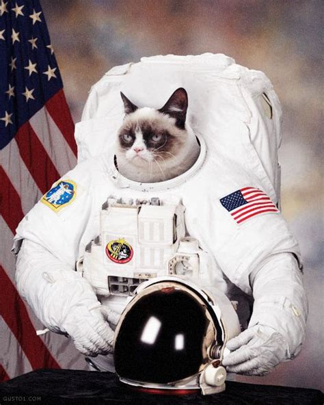 Cat In Suit Meme - 73 best images about photoshop fun on pinterest photo manipulation astronauts and mona lisa