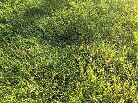 Pflege Der Grundstücksgrenze Unkraut by Rasenpflege 5 Tipps F 252 R Die Richtige Pflege Ihres Rasens