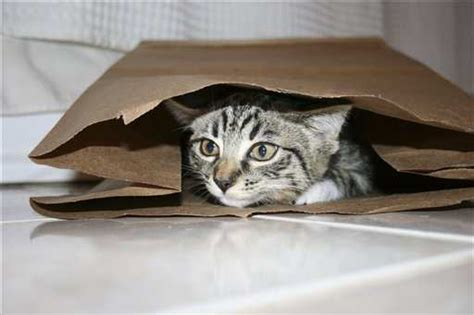 Cats In Bags Cuteness Overflow
