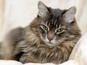 cat finder how to choose a cat litter petfinder